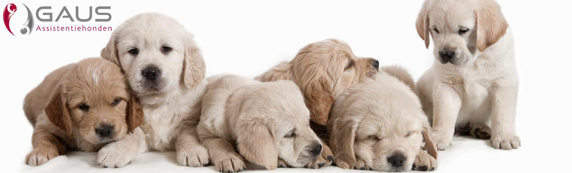 Gaus Puppycoach